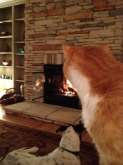 Cat  and HoHo by fireplace