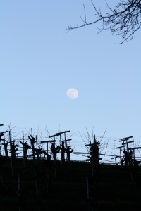 Moonrise over Yorkville Cellars.