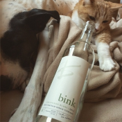 A careful kitten always inspects the bottle closely to make sure it's really empty— particularly with a wine as delicious as Bink's Old Chatham Ranch Sauvignon Blanc