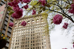 Flatiron Building in bloom. ©2015 Lucy Mathews Heegaard